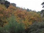 Sonbaharda_Çınar