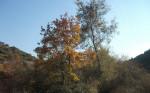 Sonbaharda_Çınarlar10