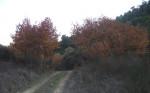 Sonbaharda_Çınarlar11