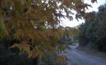 Sonbaharda_Çınarlar8