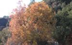 Sonbaharda_Çınarlar9