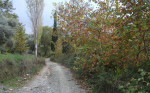 Sonbaharda_Çınarlar_ve_Kavak