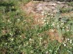 Sonbaharda_Çiçekler1
